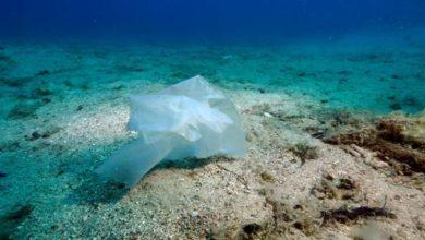 Photo of Des campagnes de sensibilisation aux enjeux écologiques dans le sud de la Méditerranée durant le mois de juin