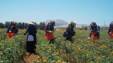 Photo of L'OMT et la FAO s'associent pour promouvoir le tourisme rural