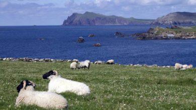 Photo of IRLANDE : REPRISE DES VOYAGES TOURISTIQUES DES LE 19 JUILLET
